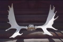 A-Moose1