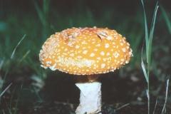 CD-Mushroom2